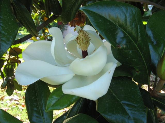 © Renate Egger. Herbarium Magnolia. Installation. Artfarm Pilastro. Pilastro di Bonavigo, Verona, Italy, 2005
