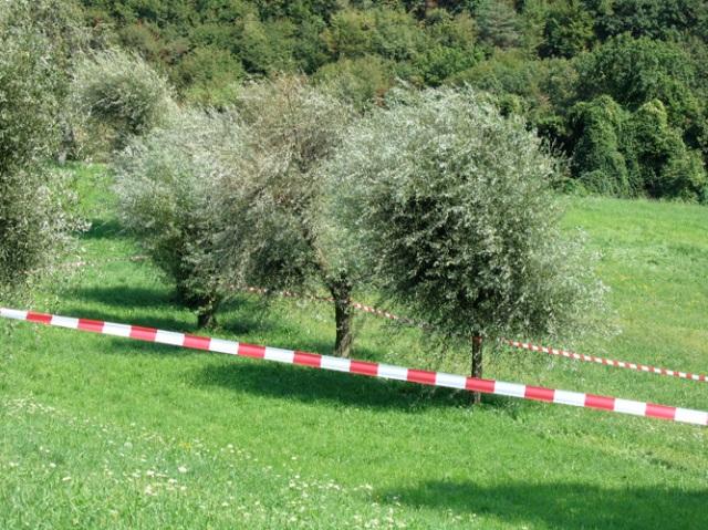 © Renate Egger. Paradies/Paradise/Paradiso, 2006. Installation, Land art. Absperrband, Weidenbäume/Barrier tape, willow-trees. Sentieri nell`Arte. Caprino Veronese, Garda, Italy