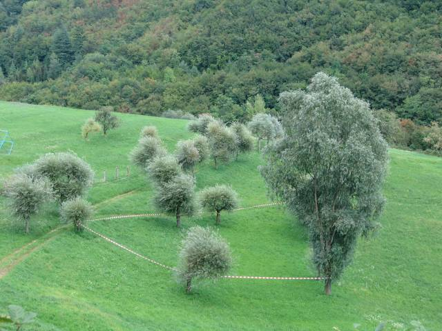© Renate Egger. Paradies/Paradise/Paradiso, 2006. Installation, Land art. Absperrband, Weidenbäume/Barrier tape, willow-trees. Sentieri nell`Arte. Baldo Festival. Caprino Veronese, Garda, Italy
