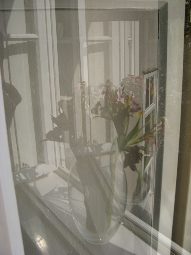 © Renate Egger. Spiegelung. Tulpen/Reflection. Tulips. 2011. Installation, Fotografie/Installation, photography