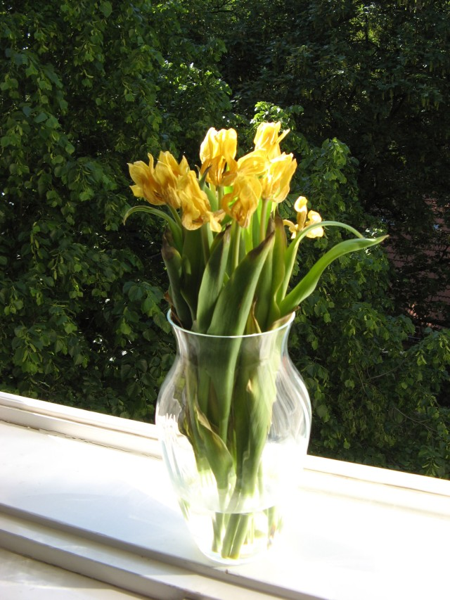 © Renate Egger. Herbarium Tulpen/Herbarium tulips, 2012. Installation, Fotografie/Installation, photography