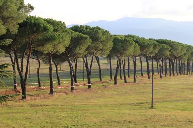© Renate Egger. Paradies/Paradise/Paradiso. Installation. Bäume, Absperrband/Trees, barrier tape. Artist in Residence. Domus Artium. Azienda Colonna. Cervinara, Paliano, Italy, October 2011