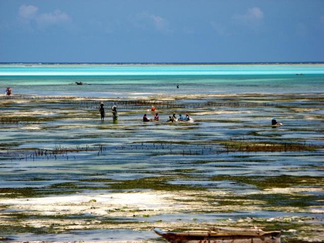 © Renate Egger. Licht/LIght, III. Jambiani, Zanzibar, Africa 2015