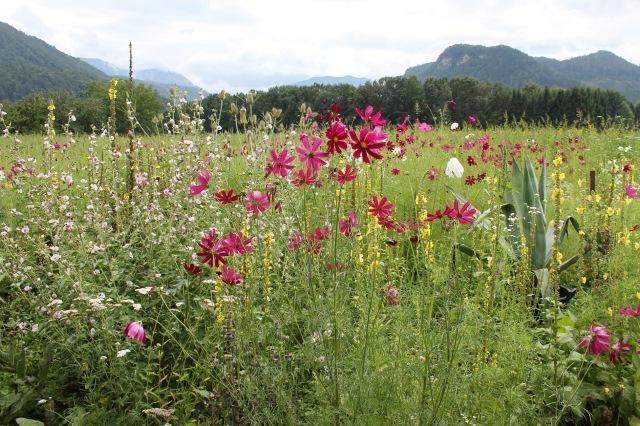 © Renate Egger. Landschaft/Landscape, 2014. Kärnten/Carinthia, Austria