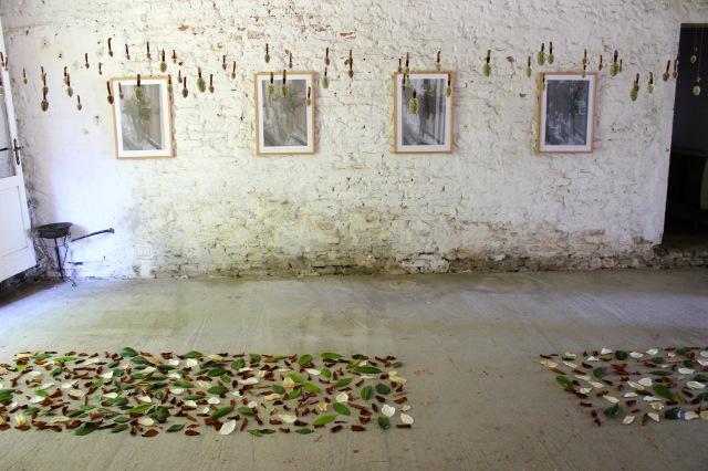 © Renate Egger. Herbarium Magnolia, 2005/2015. Installation. Ultima Edizione. Artfarm Pilastro. Pilastro di Bonavigo. Verona, Italy, 2015