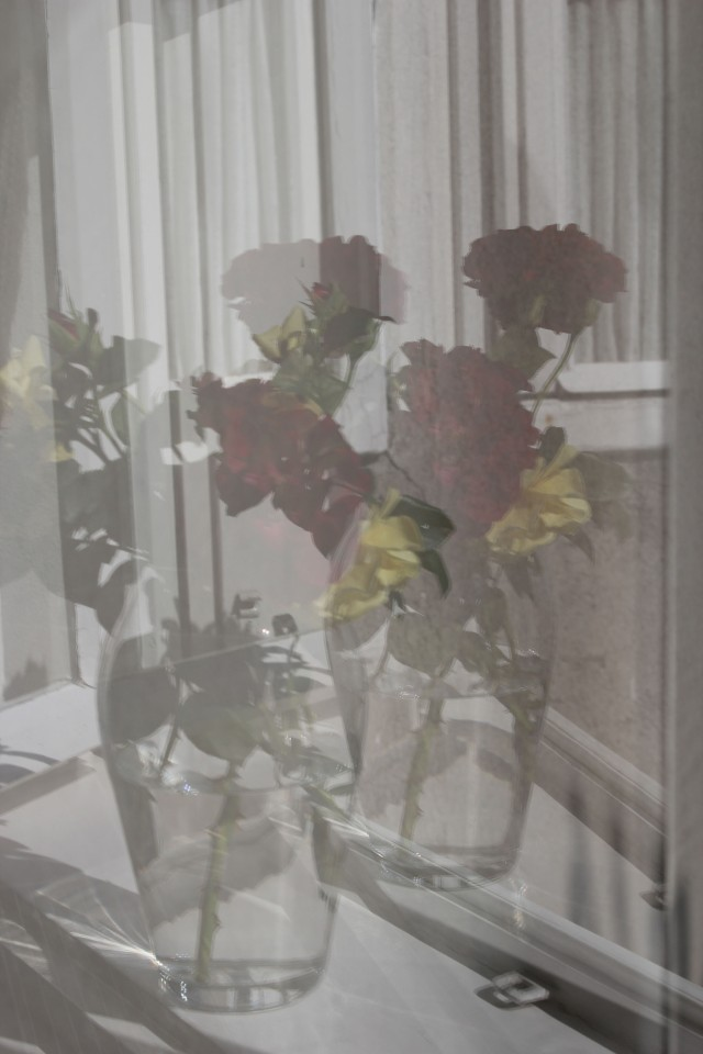 © Renate Egger. Rosen/Roses, 2015. Series: Spiegelung/Reflection