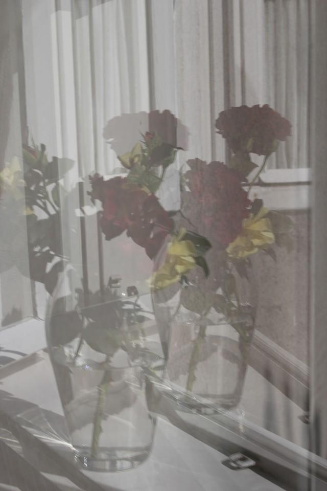 © Renate Egger. Rosen/Roses, 2015. Series: Spiegelung/Reflection
